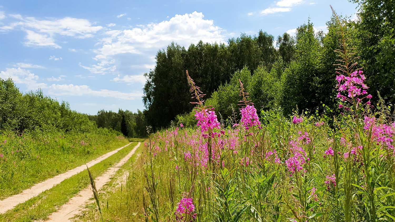 каменские холмы лес, природа каменки, каменские холмы, лес, лесная дорога