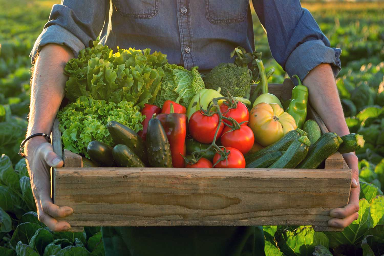 огород, продукты с огорода, натуральное хозяйство, помидоры, огурцы